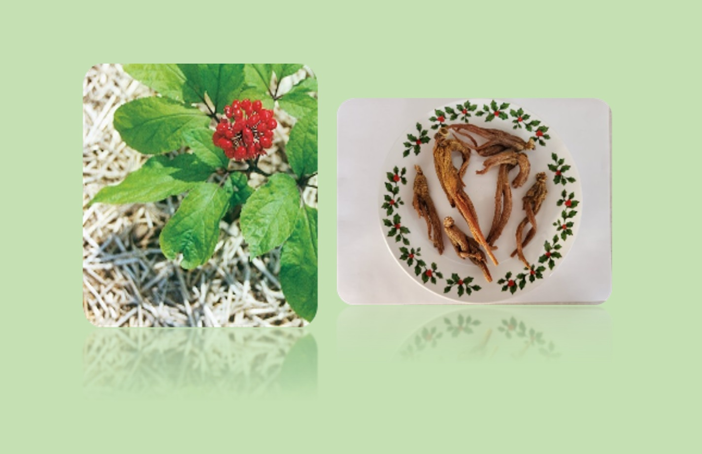 Asian Ginseng Root (Ren Shen - 人參)