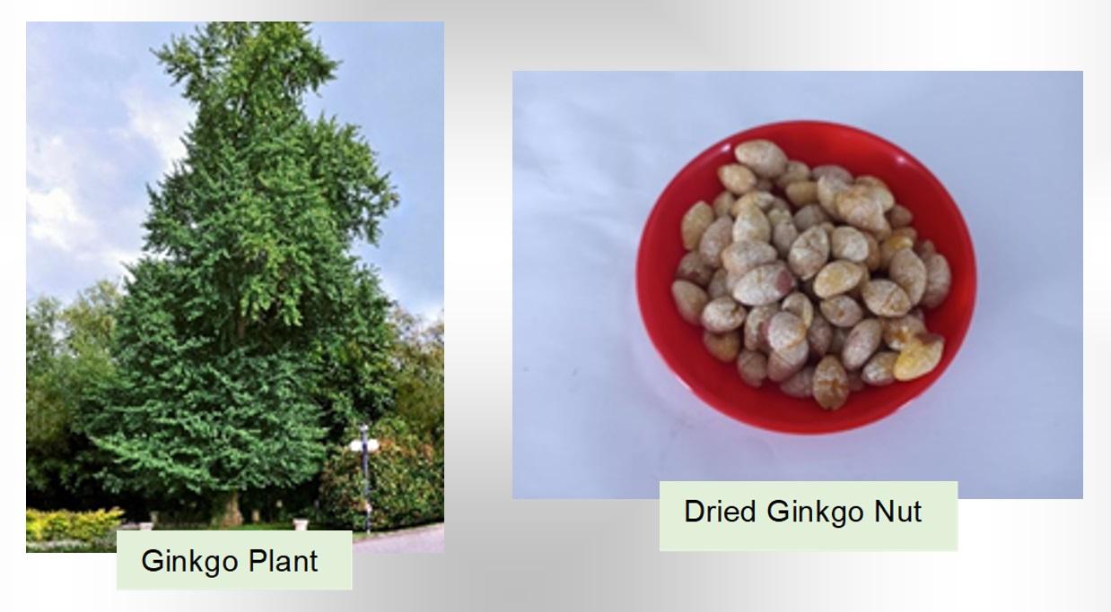 Ginkgo Nut (Bai Guo - 白果)